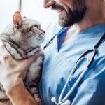 Tierkliniken in der Steiermark
