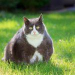 Übergewicht bei Haustieren